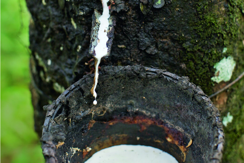 Continental and GIZ commited to Sustainability in the natural rubber supply chain